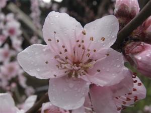 Flors de Cal Coracero