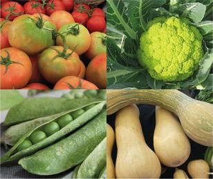 verdures del temps